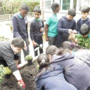 Gardening workshops and our Humanities Topic